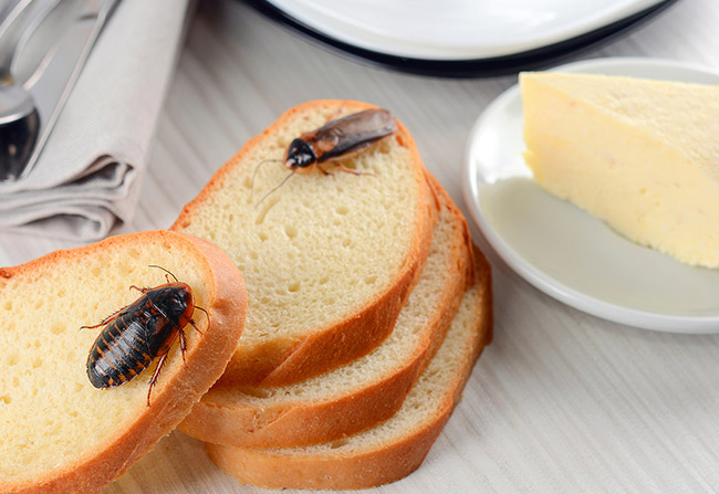 fly on bread